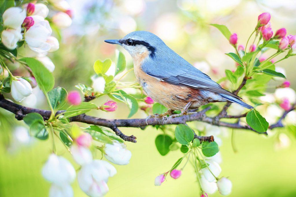 Ptica Spomladi